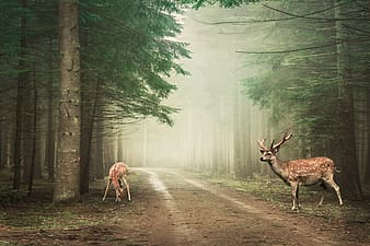 Brown deer on road between trees