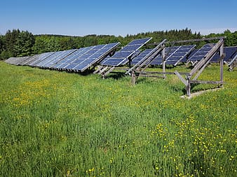Blue solar panels surrounded by grass at daytime