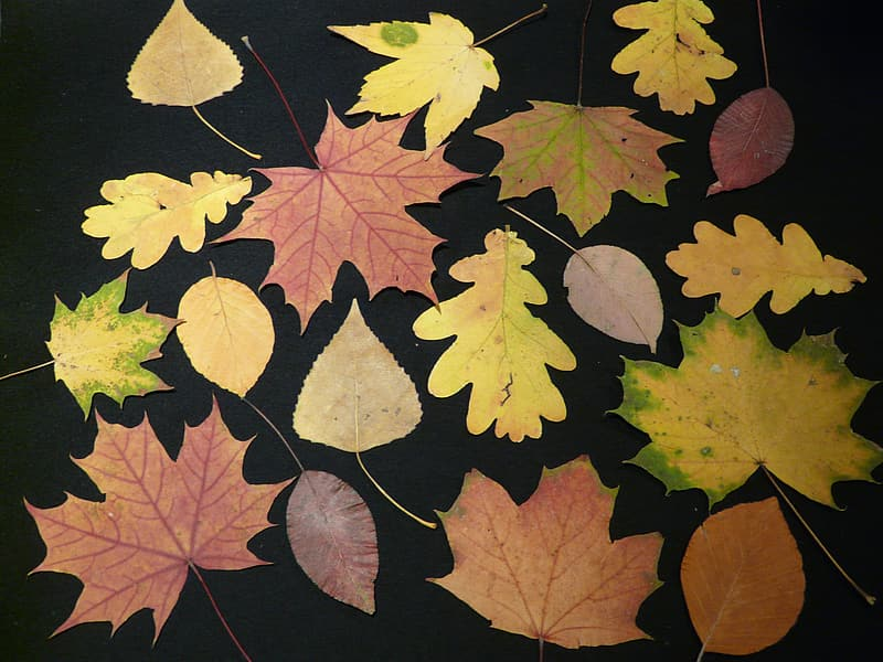 Brown and green maple leaves decor