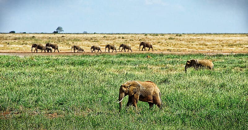 Group of elephants on grass
