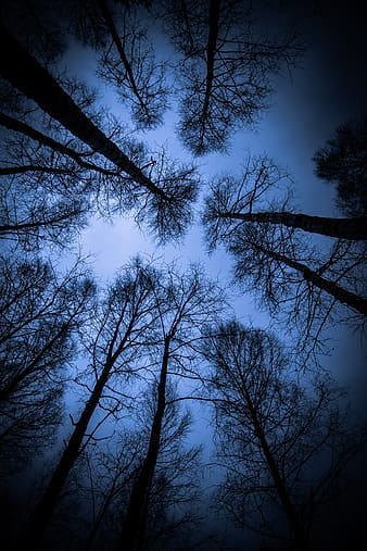 Silhouette trees in low angle shot
