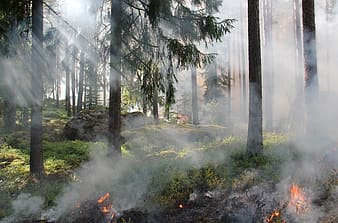 Photo of forest fire