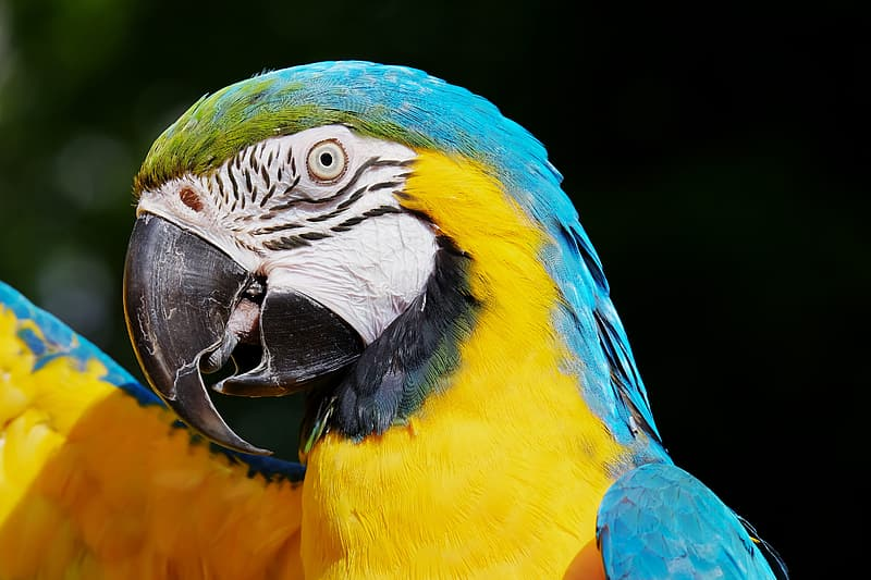 Shallow focus photography of blue and yellow bird