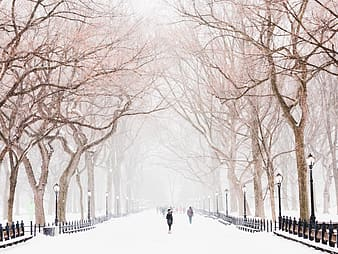 People walking on snow covered ground near bare trees during daytime