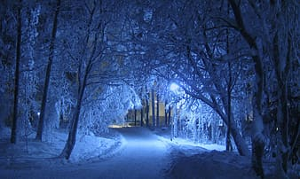 Snow covered pathway between trees during nighttime
