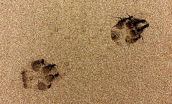 Footprint of animal