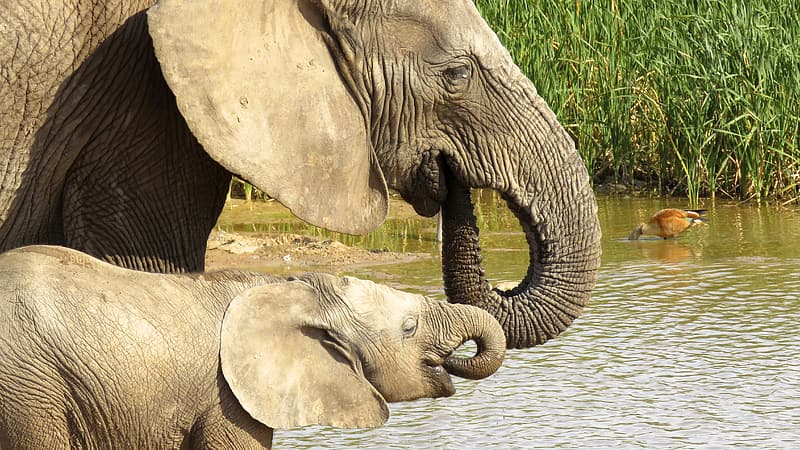 Wildlife photography of elephant with baby
