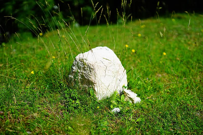 White stone on green grass during daytime