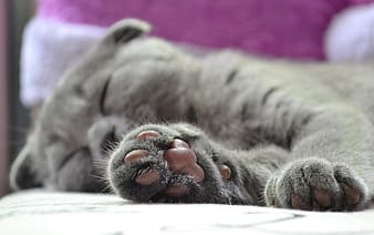 Selective photography of gray cat