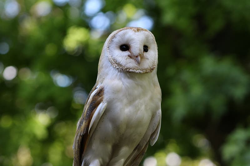 Selective-focus photography of white owl