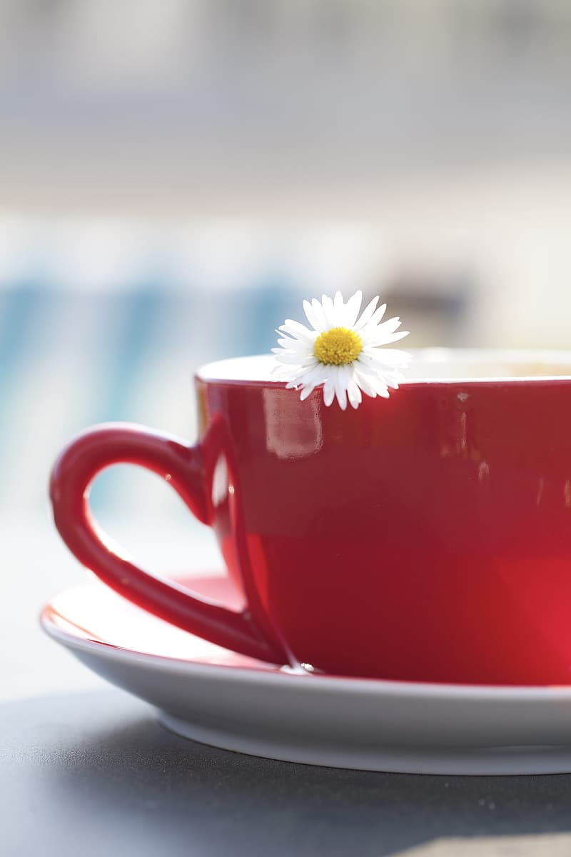 White and yellow flower on red and white ceramic cup