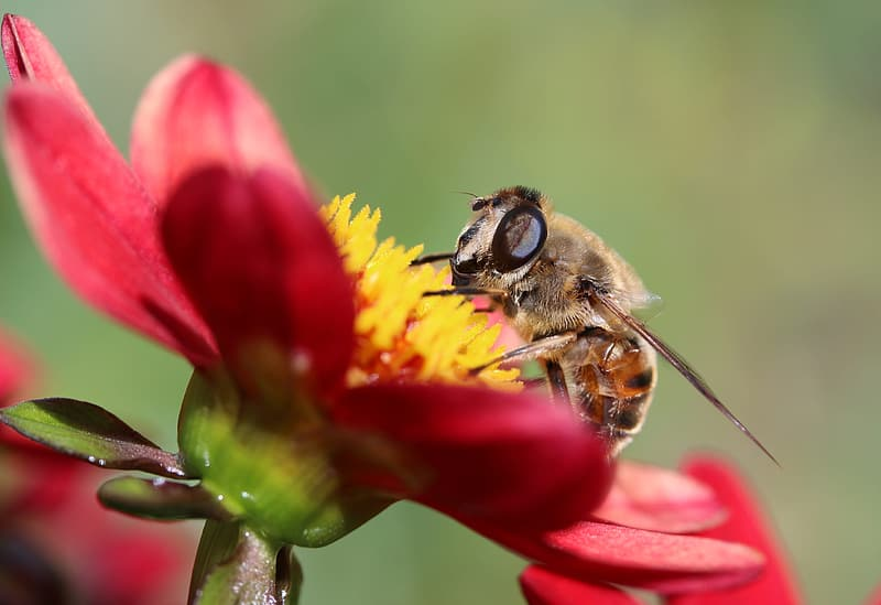 Closeup photo of hoverfly perching on flower