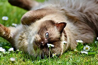 Brown cat lying on grass
