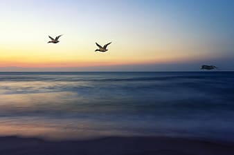 Three gray birds flying above body of water at daytime