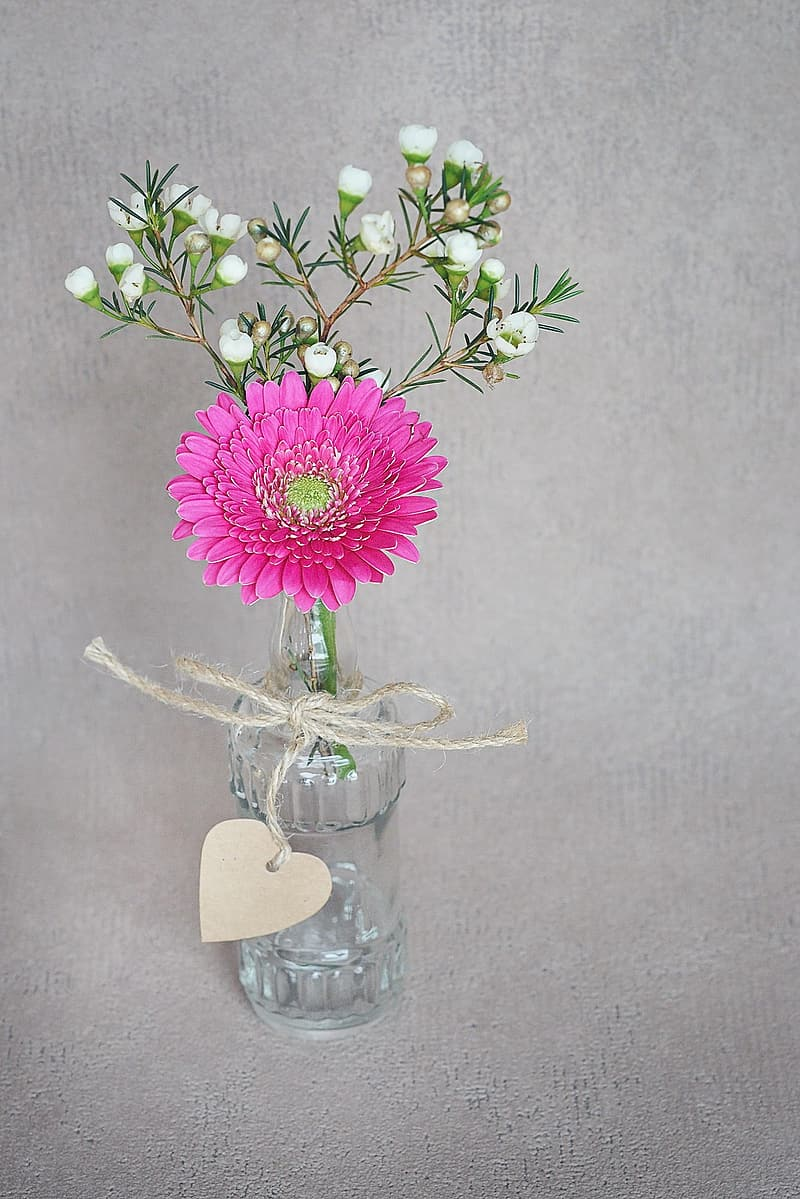 Pink Gerbera daisy flower and white erica flowers in clear glass bottle centerpiece