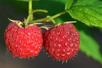 Close-up photography of raspberries