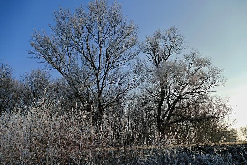 Leafless trees on brown grass field under blue sky during daytime