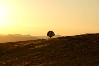 Green leaf tree over silhouette of mountain during sunset
