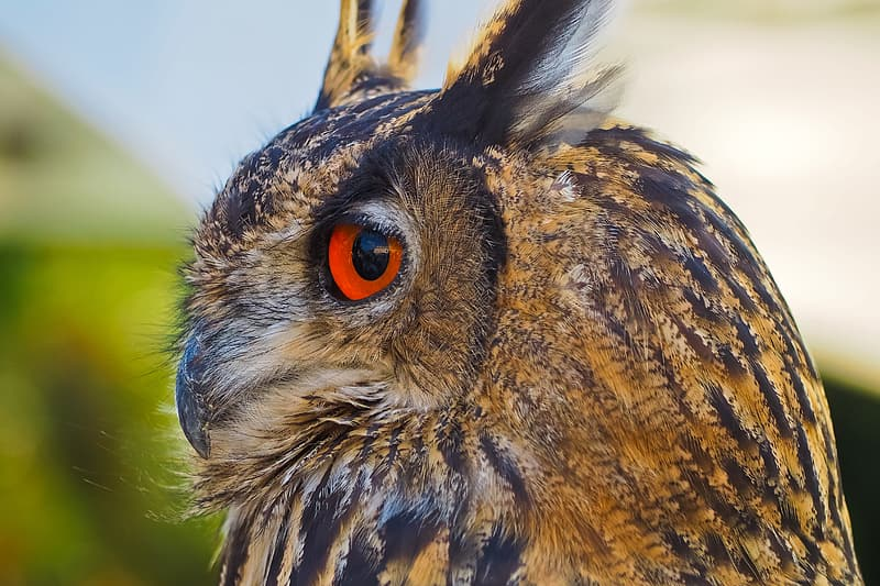 Focused photo of brown and black owl