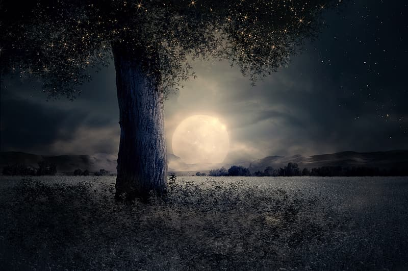 Full moon over green foliage tree and field