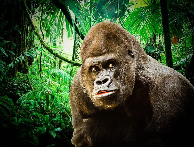 Black gorilla surrounded by green leaves