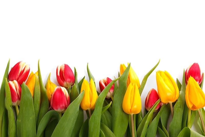 Yellow, red, and green petaled flowers
