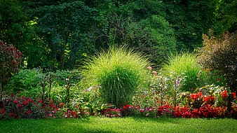 Green grass and red flowers