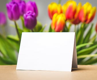 Shallow focus photography of white paper in front of tulips
